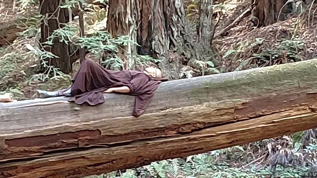 A monk on a fallen redwood